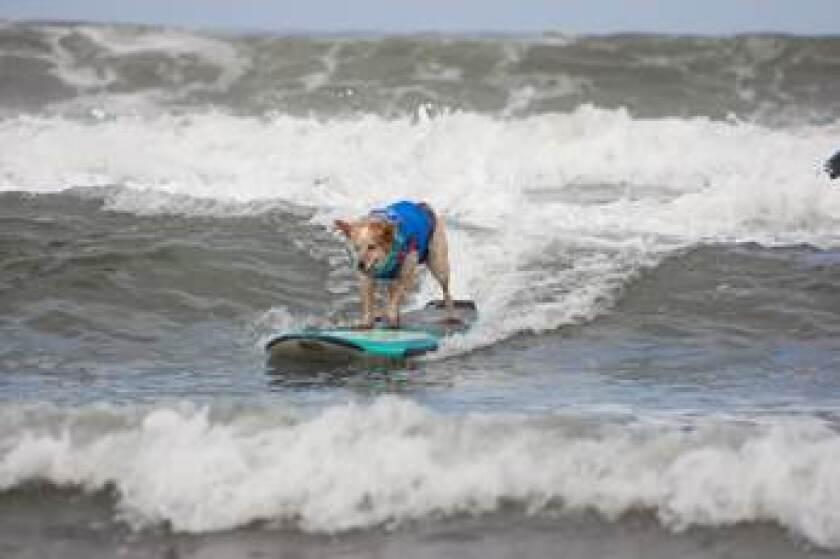 Dog surf a thon