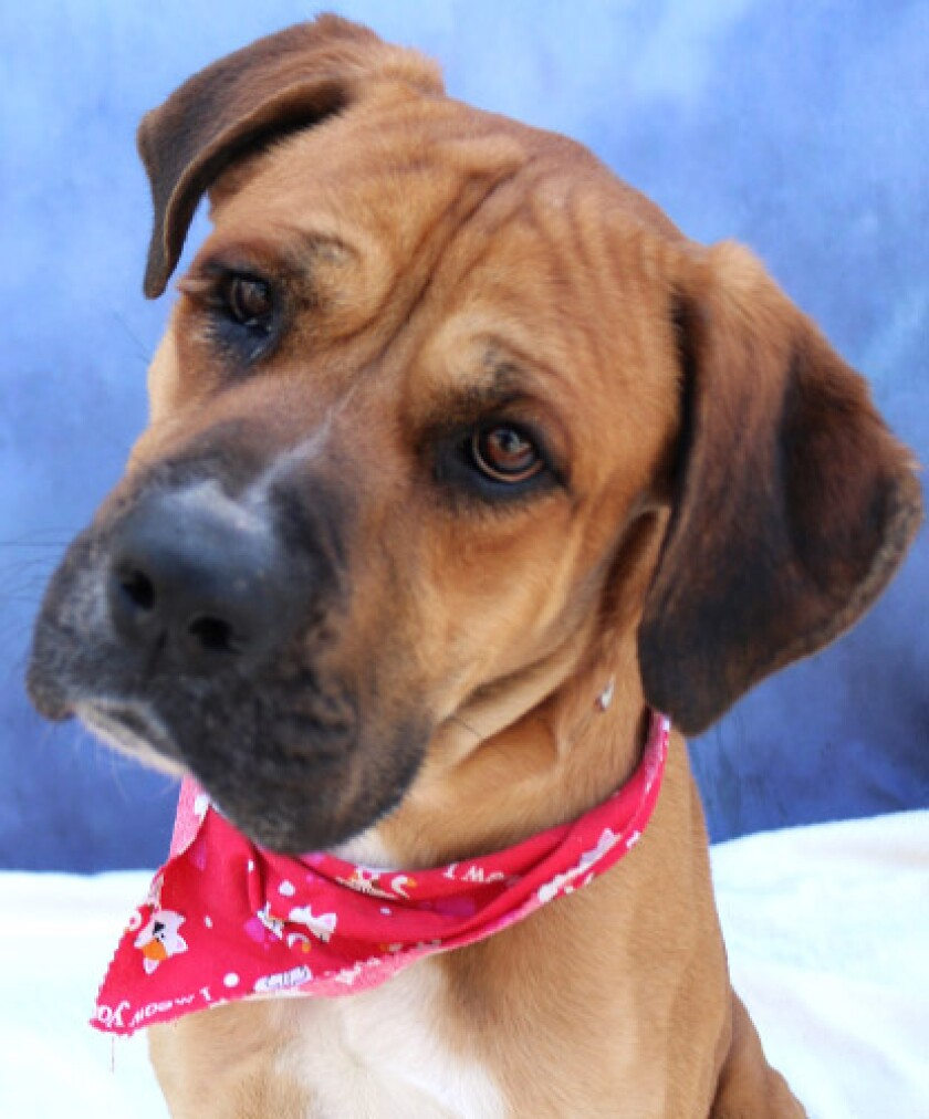 Pet of the week is looking for an active family.
