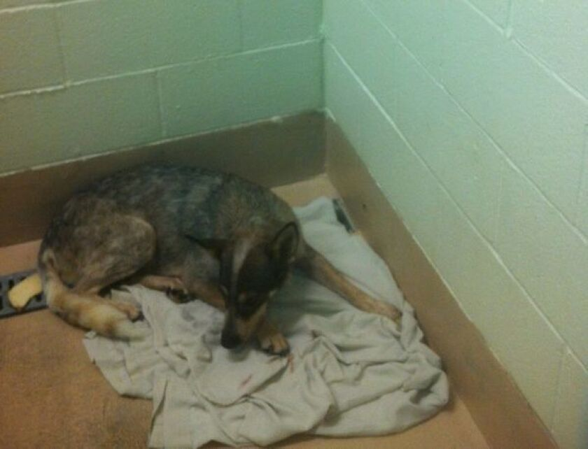 Riverside County woman charged with 30 counts of animal cruelty