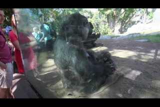 San Diego Zoo baby animals