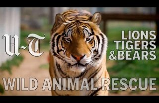 Lions Tigers & Bears