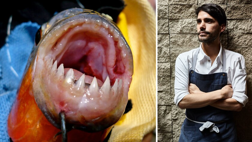 A piranha caught in Peru, and chef Virgilio Martinez at his restaurant Central in the capital city of Lima.