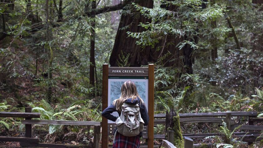SAN FRANCISCO, CALIF. -- WEDNESDAY, NOVEMBER 11, 2015: A visitor looks over a map at Muir Woods Nati