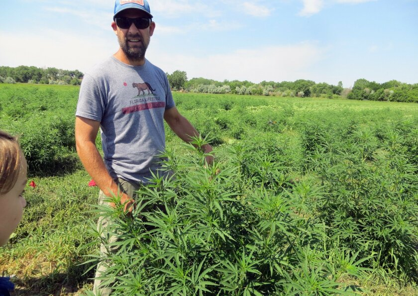 In this June 23, 2016, photo, farmer Will Cabaniss stands with his crop on his 20-acre hemp farm in Pueblo, Colo. Three years into the nation's hemp experiment, the crop's hazy market potential is starting to come into focus. Most of it is being pressed for therapeutic oils, not processed into rope