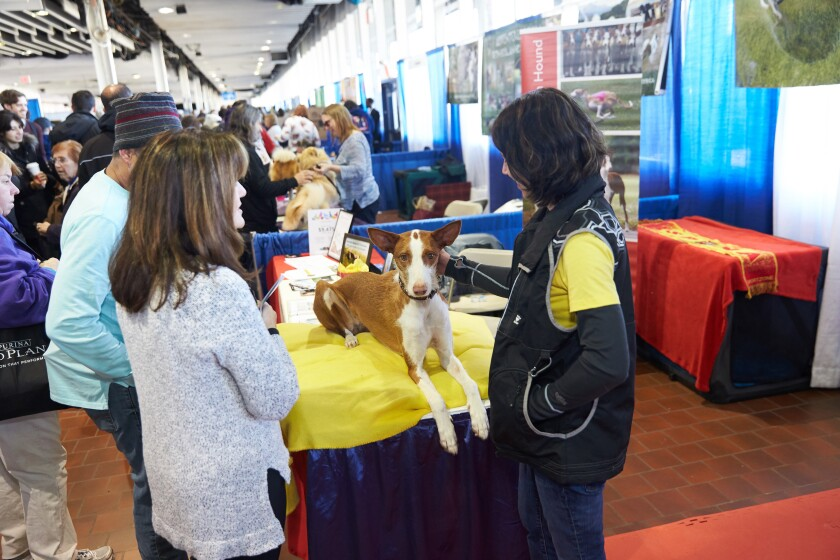 Hundreds of dog breeds are represented at a 2019