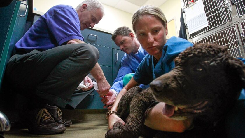 Dr. Keith Richter (left), a founder of FACE, performs a biopsy on the tail of his dog Bloopis with h