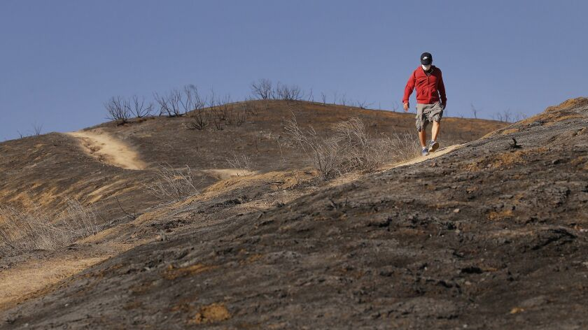 AGOURA HILLS, CA - NOVEMBER 12, 2018. Bryan Nguyen walks a scorched trail in Liberty Canyon Monday