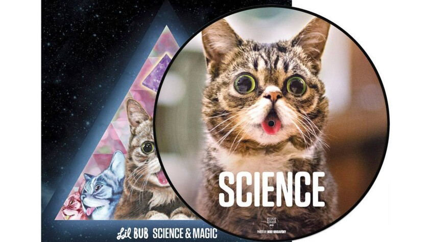 """The vinyl version of Lil Bub's forthcoming album, """"Science and Magic."""""""