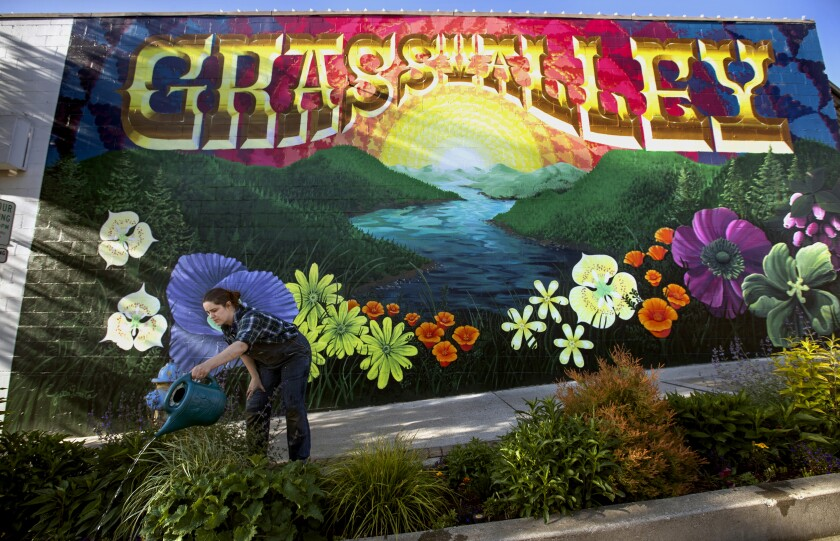 Elizabeth Poston, owner of Living Outdoors Landscapes, waters plants on Main Street in Grass Valley.