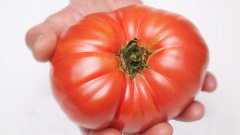 Don't put this tomato in the refrigerator! A new study explains how cold temperatures rob tomatoes of their flavor by altering their gene expression.