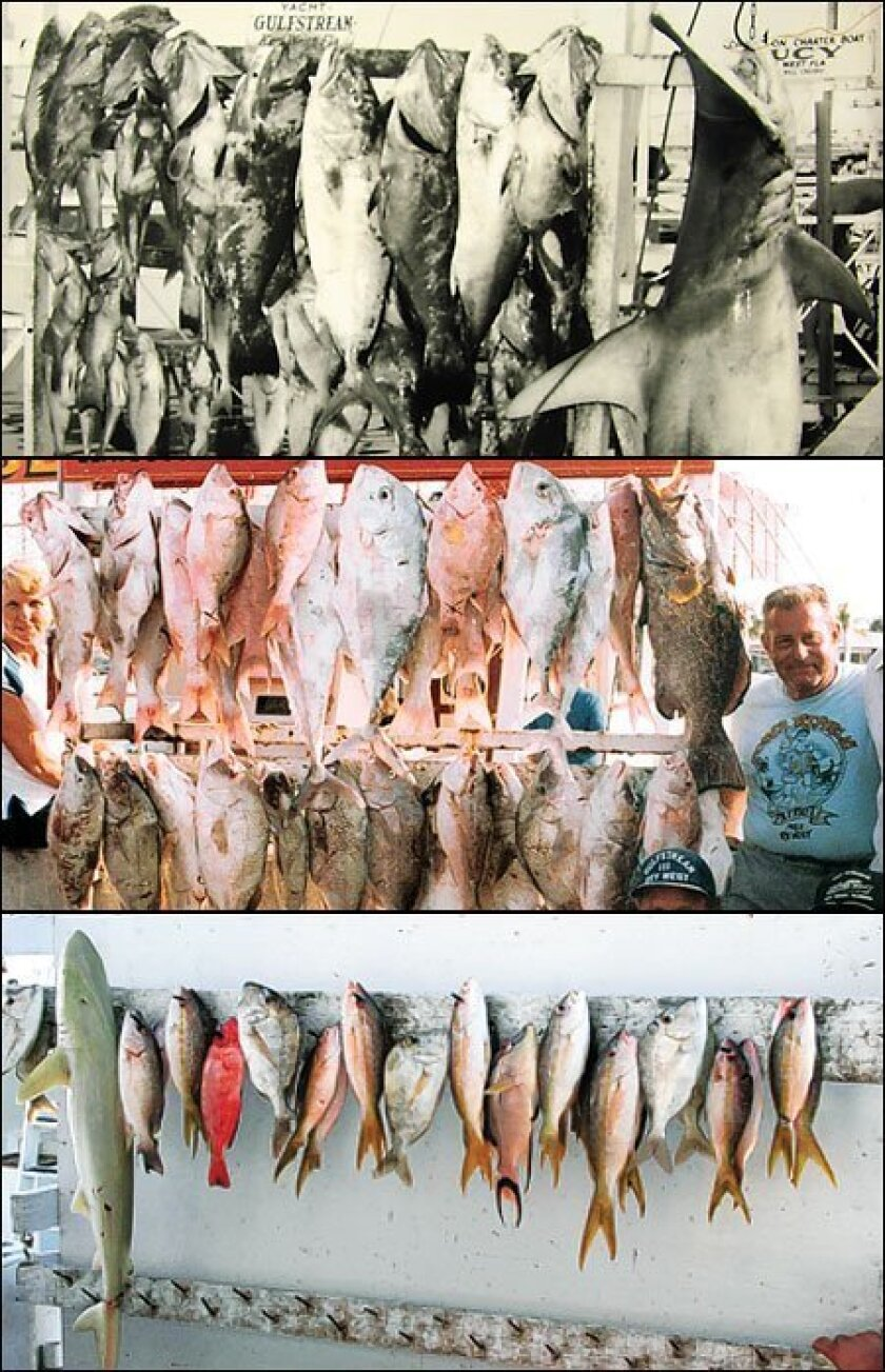 <strong>Top:</strong> This photo was taken in 1957, when trophy fish had a mean size of 61⁄2 feet. <strong>Middle:</strong> By the mid-1980s, fish displayed at the dock were noticeably smaller. <strong>Bottom:</strong> By 2007, when this photo was taken, fish had a mean length of 1 foot. (Photos co