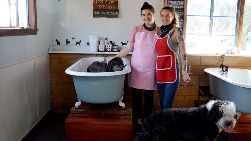 Penny's Pup Wash groomers, Lindsay Brown, left and Marylou Kaegebein, with canine clients.