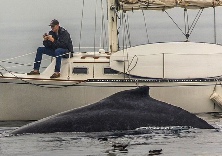 A man so engrossed in his phone did not notice that a whale was swimming just feet away from him.