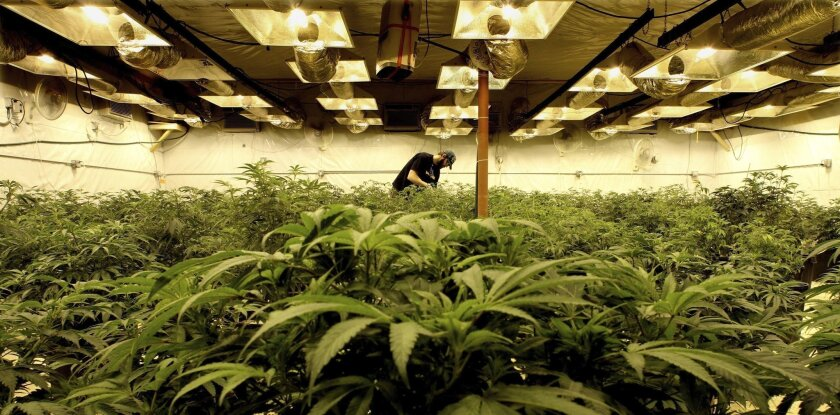 A pro-marijuana group lost its legal battle this week when a federal appellate court ruled that marijuana would remain a Schedule I drug, defined as having no accepted medical value and a high potential for abuse.