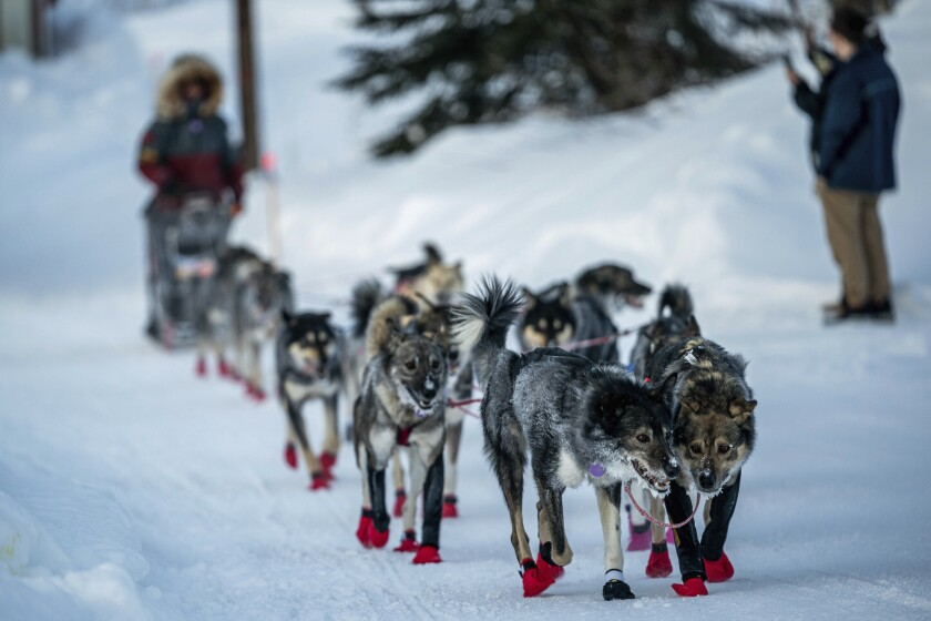 Richie Diehl arrives in Ruby, Alaska, Friday morning, March 13, 2020, during the Iditarod Trail Sled Dog Race. (Loren Holmes/Anchorage Daily News via AP)