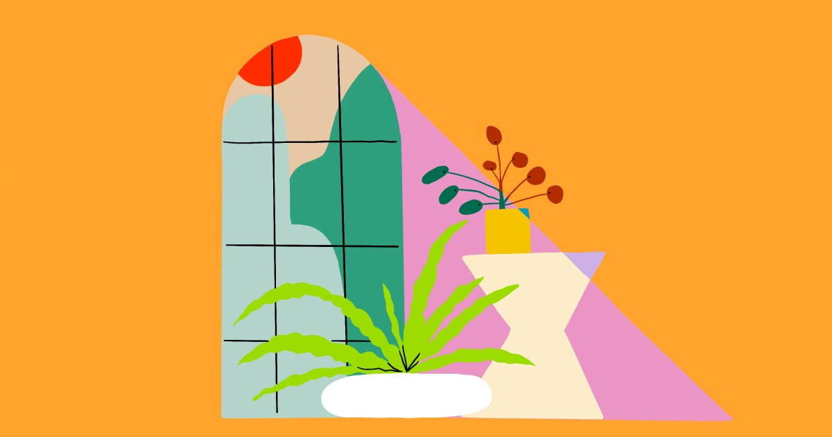 The 10 Best Indoor Plants For Full Sun Los Angeles Times