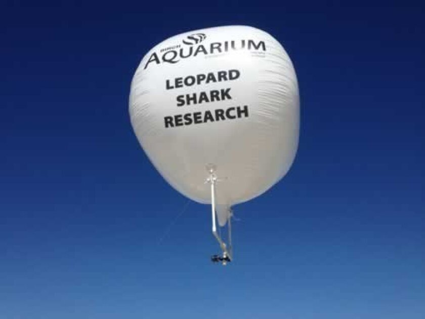 A 7-foot-in-diameter helium balloon provides sufficient lift for an HD video camera to record leopard shark movements in the waters below.