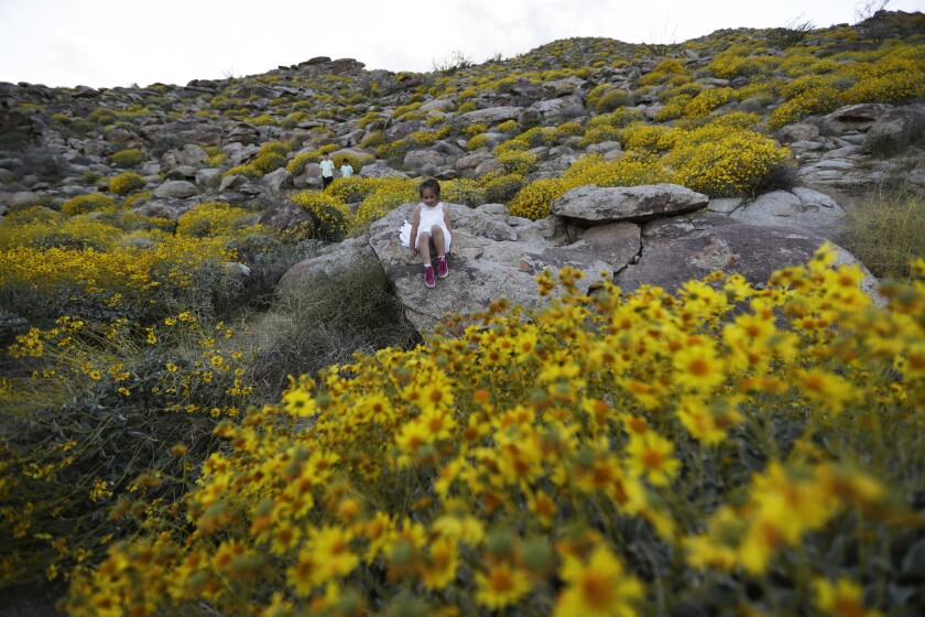 Zoey Speer of Temecula, Calif., clamors among rocks and blooming desert shrubs in Borrego Springs on March 27, 2017.