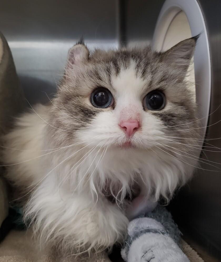 Pet of the week -- a cat named Nikki.