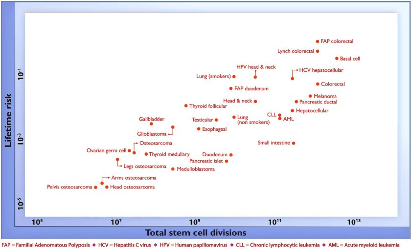 Vertical axis shows lifetime risk of cancer, higher is greater. Horizontal axis shows total number of divisions for stem cells in each tissue in which the cancer arises.