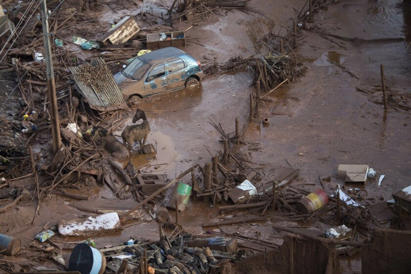 Horses struggles in the mud at the small town of Bento Rodrigues after a dam burst in Minas Gerais state, Brazil, Friday, Nov. 6, 2015.  Brazilian rescuers searched feverishly Friday for possible survivors after two dams burst at an iron ore mine in a southeastern mountainous area.  (AP Photo/Felip