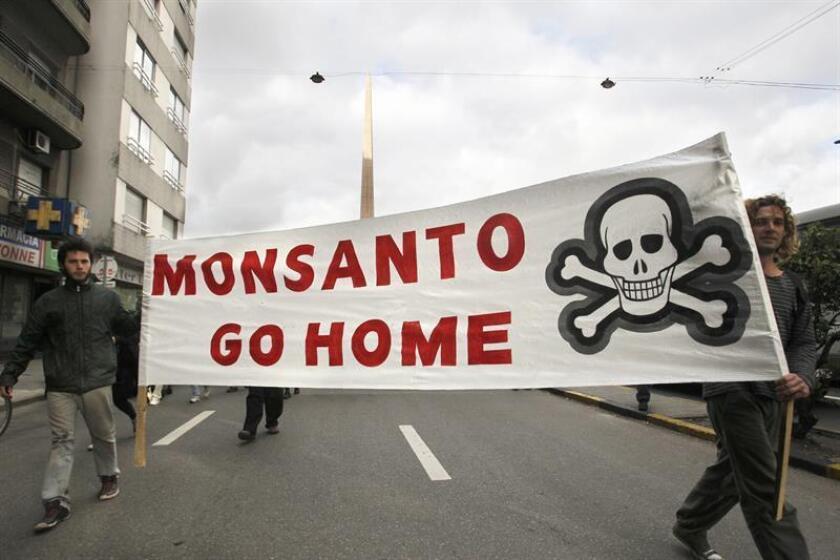 La multinacional Monsanto ha recurrido en un tribunal de California el veredicto de culpabilidad que le obliga a pagar 78 millones de dólares a un hombre que aseguraba que un producto con el herbicida glisofato de la empresa le causó cáncer terminal. EFE/ARCHIVO