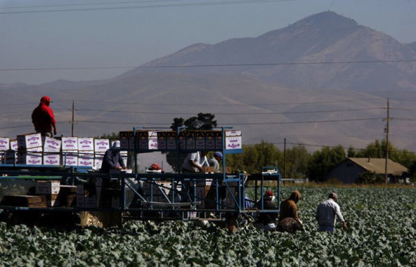 Finding a path toward immigration reform in farm fields