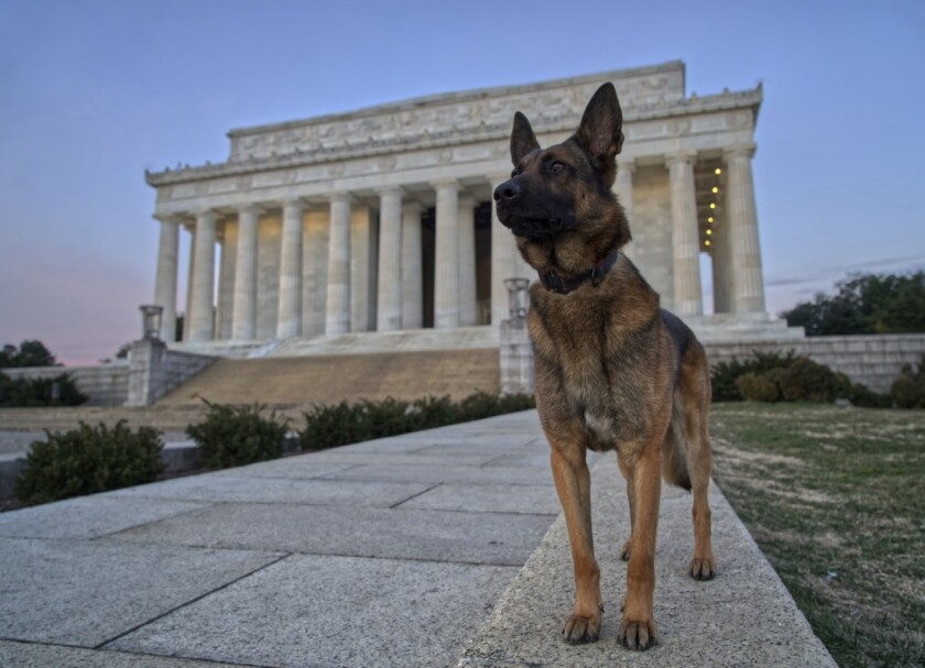 Abel the bomb-sniffing dog will likely have to part ways Friday with Marine Corps veteran Richard Pickett-White.