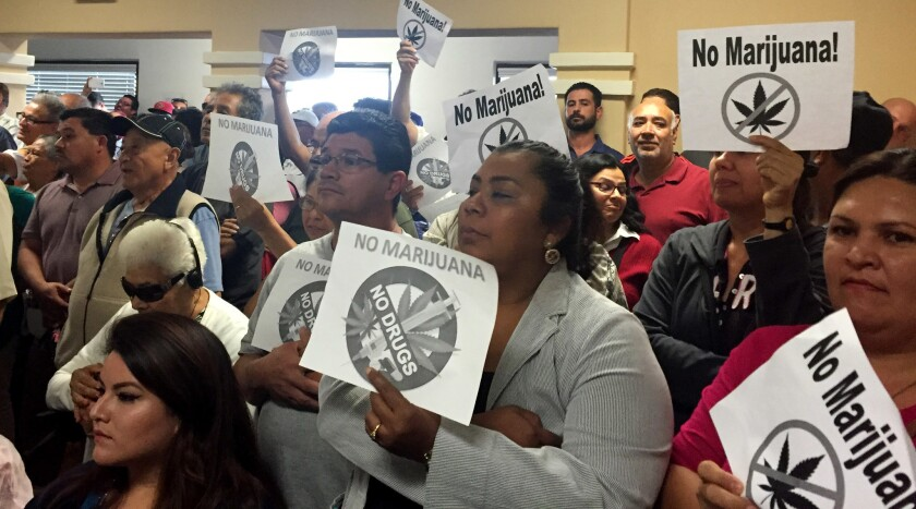 """Some Maywood residents hold signs of a marijuana plant crossed over with the words """"No Marijuana"""" at the City Council meeting."""