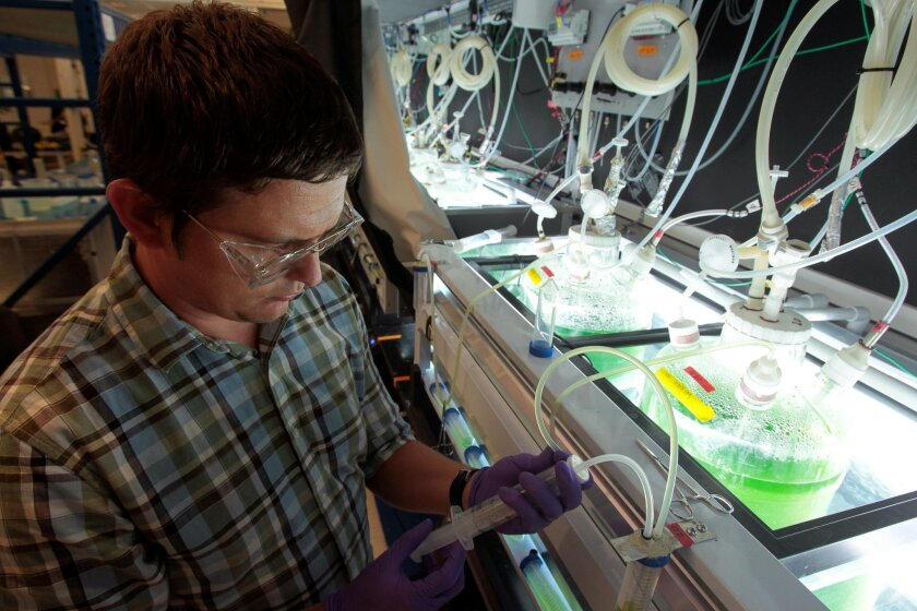 Research Associate Levi Williams samples algae from controlled growth reactors at Sapphire Energy in La Jolla.