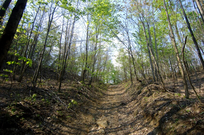 A rocky utility road leads to the top of West Virginia's Blair Mountain, where sheriff's deputies and mine guards battled thousands of union miners in August and September 1921. Today's fight is over whether to mine the mountain or preserve it.