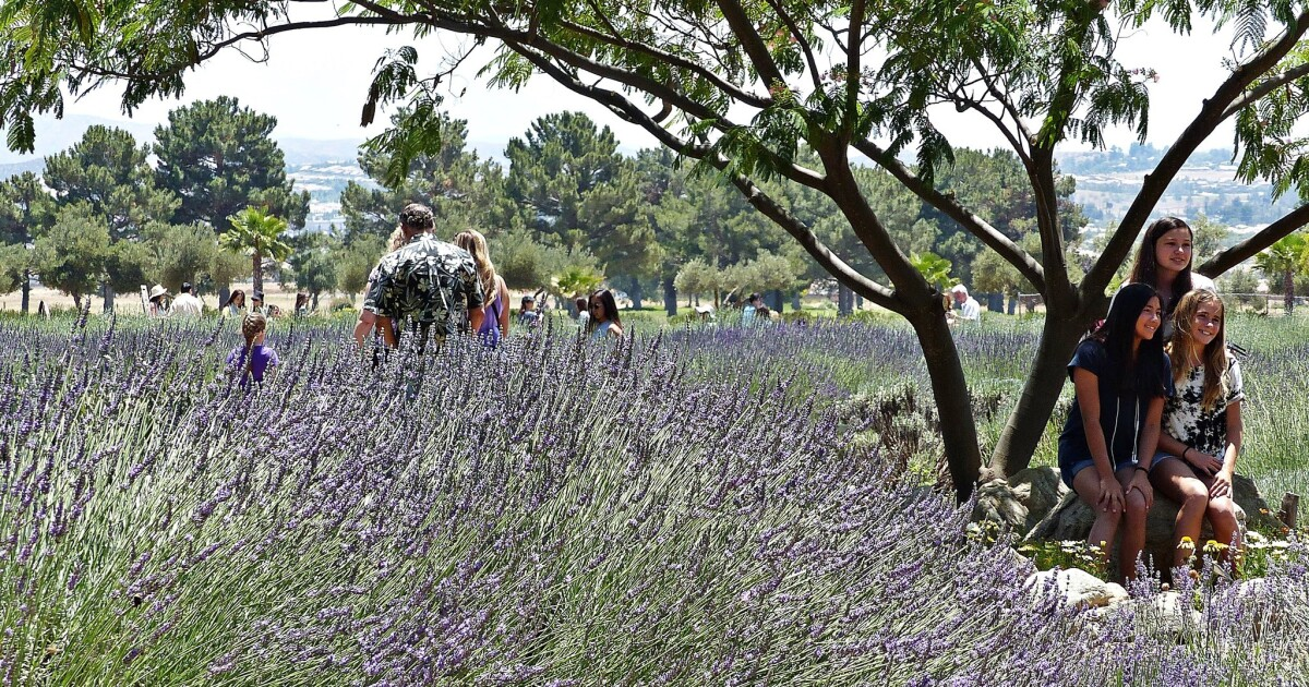 Stop And Smell The Lavender At These California Places Los Angeles Times