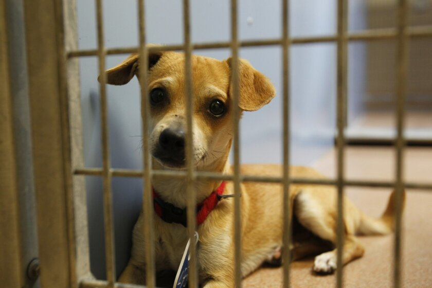 """Hundreds of dogs like this one, cats and other companion animals will be available for adoption at no cost at the annual """"Clear the Shelters"""" event this Saturday, Aug. 17 at animal care facilities throughout the county and across the country."""