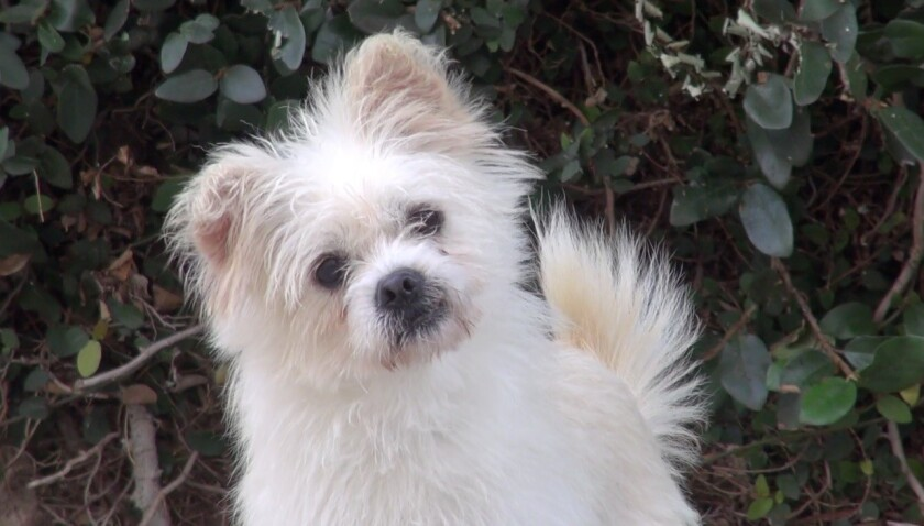 Salty is a 1-year-old terrier mix.