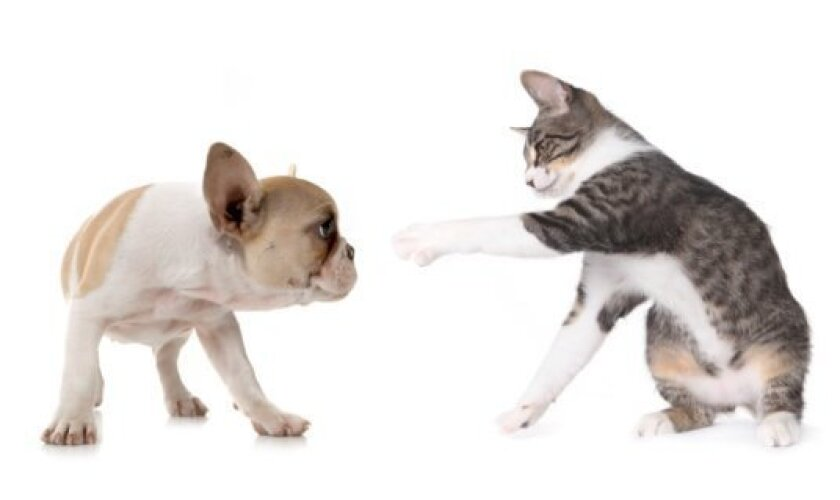 Proper veterinary care for puppies and kittens is critical for healthy development.