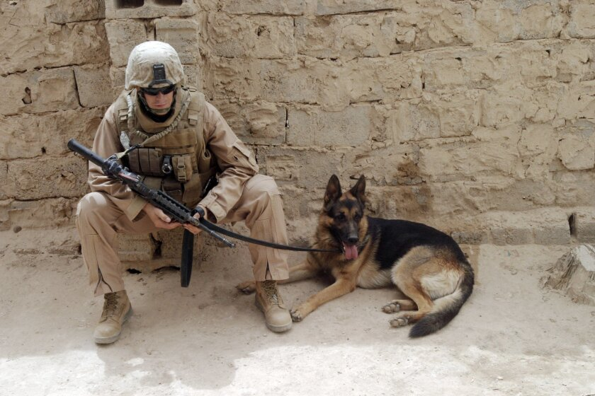 Cpl. Max W. Donahue previously served in 2008 in Lahib, Iraq with Paco, his military working dog pictured here, and 3rd Battalion, 10th Marine Regiment. Donahue died Saturday after being wounded Aug. 4 in Helmand Province, Afghanistan. He was assigned to Headquarters Group, 1st Marine Expeditionary