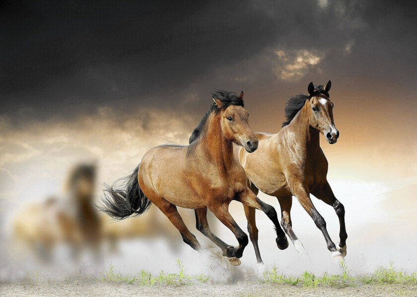 The ways horses interact in herds can offer lessons for human interaction too.