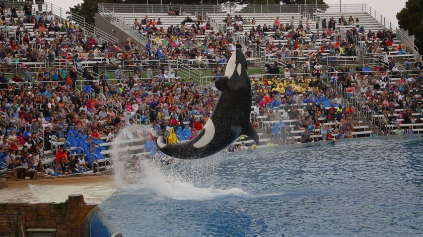 SeaWorld's announced layoffs come amid rising attendance at its theme parks this year.