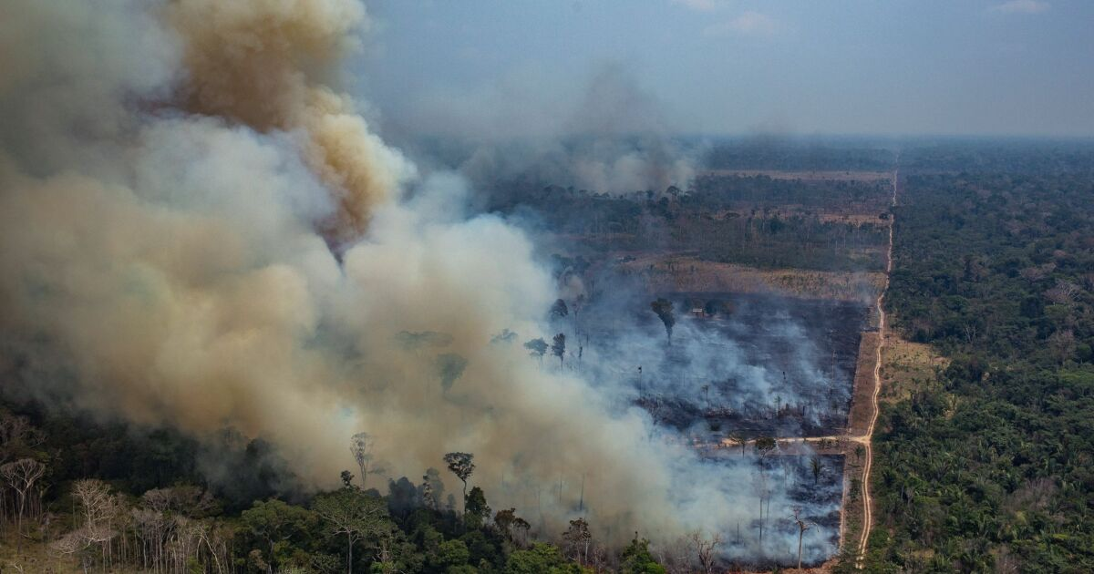 The Amazon rainforest is on fire. Climate scientists fear a tipping point is near - Los Angeles Times