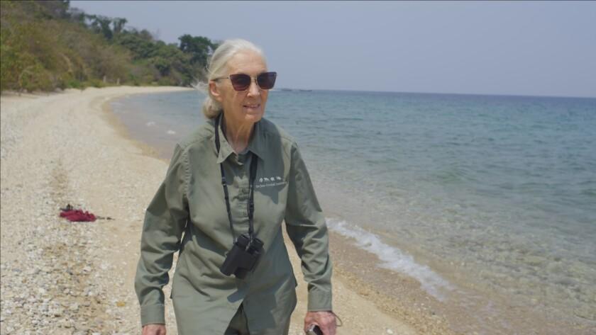 """Jane Goodall walking along the beach of Lake Tanganyika in """"Jane Goodall: The Hope."""""""