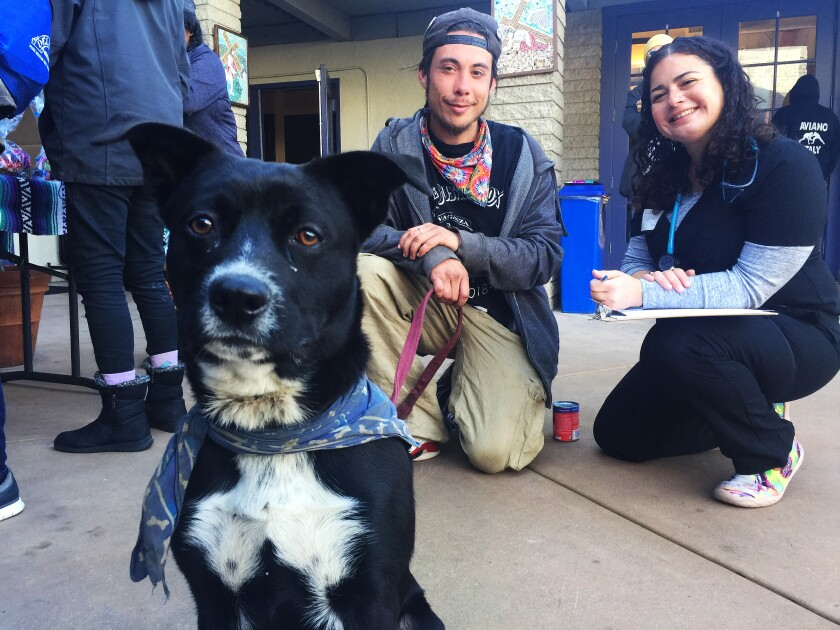 Ryder, a Catahoula/Labrador/pit bull mix, awaits a checkup at a Street Dog Coalition clinic while his owner Shamus butler (center) gives information on his pet to veterinarian Rebeca Uribe.