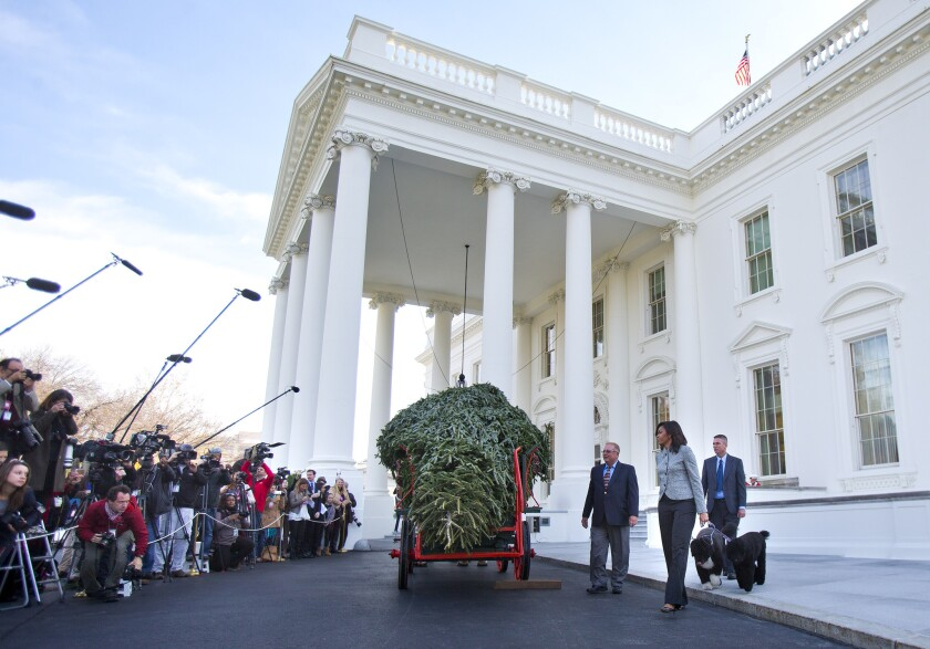 La primera dama, Michelle Obama, centro, con sus perros Bo y Sunny, recibe al árbol navideño oficial de la Casa Blanca en Washington, el viernes 27 de noviembre de 2015. Este año el árbol oficial, que se exhibirá en el Blue Room, es un abeto Fraser con más de 5,5 metros (18 pies) de altura que creció en Pennsylvania. (Foto AP/Pablo Martinez Monsivais) First lady Michelle Obama, center, with her dogs Bo and Sunny, welcomes the Official White House Christmas Tree to the White House in Washington, Friday, Nov. 27, 2015. This year's White House Christmas tree, which will be on display in the Blue Room, was presented by Jay Bustard, left, and his brother Glenn Bustard, right, from Bustard's Christmas Trees in Lansdale, PA. (AP Photo/Pablo Martinez Monsivais)