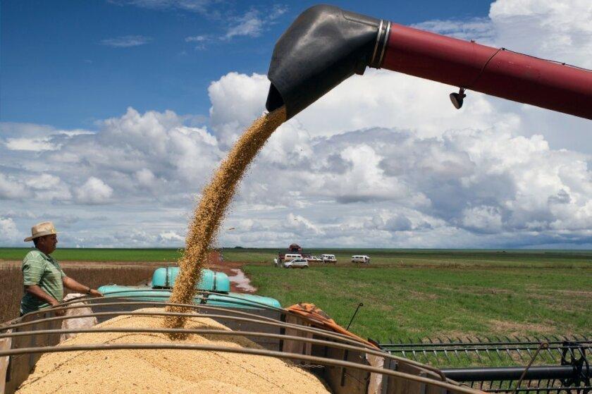 A combine harvest pours soy into a truck.