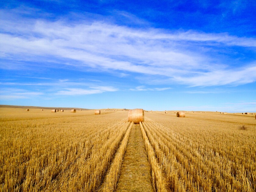 Montana hay field