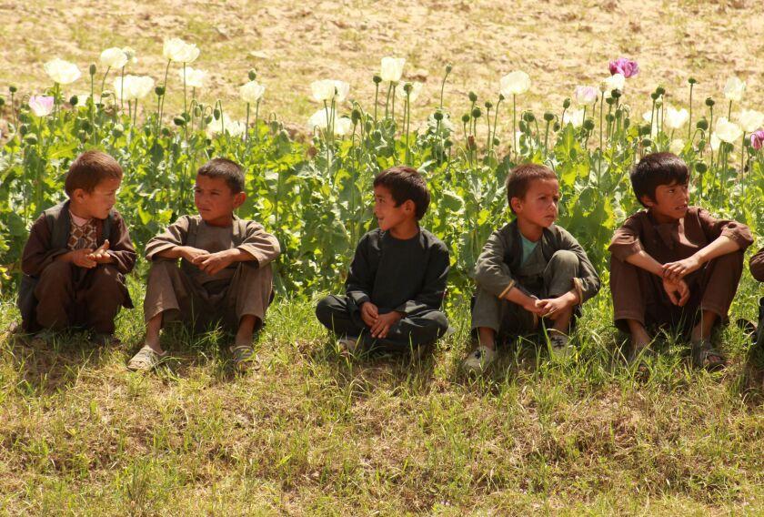 کودکان افغان در کنار مزارع خشخاش در ولایت بدخشان نشسته اند.