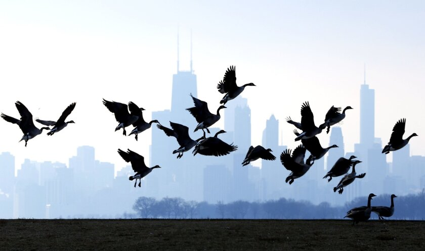 """File-This Jan. 6, 2013, file photo shows geese flying over Lake Michigan at Montrose Beach in Chicago. The cost of six geese-a-laying spiked considerably this year, while most of the items in the carol """"The Twelve Days of Christmas,"""" saw little to no increase, according to the 31st annual PNC Wealth Management Christmas Price Index. Six geese-a-laying now costs $360 versus $210 last year. (AP Photo/Nam Y. Huh, File)"""