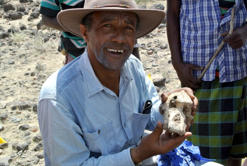 """Yohannes Haile-Selassie holds the cranium known as """"MRD."""""""