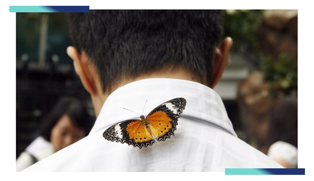 A butterfly rests on a man's collar at Changi Airport.
