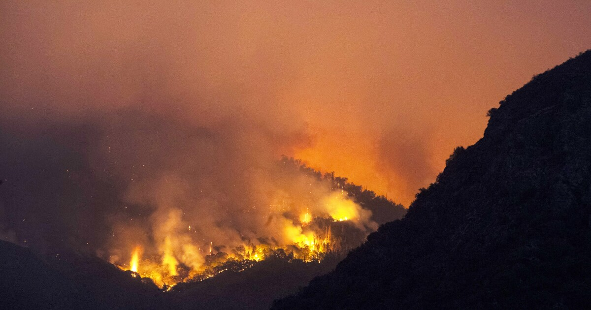 Giant Forest trees prepped for flames in Sequoia National Park as KNP Complex fire closes in