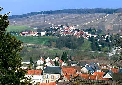 Vine country